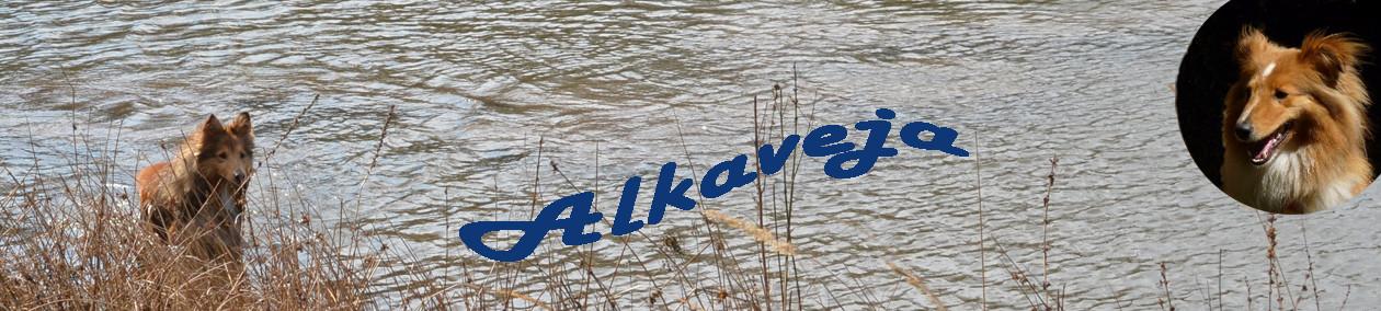 Chovatelská stanice šeltií ALKAVEJA